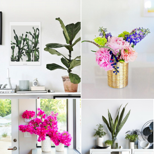 Fresh Flowers and Indoor Plants