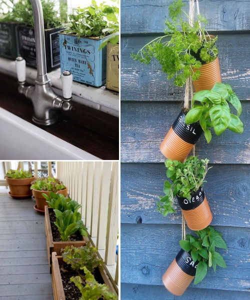 Indoor Vegetable Gardens
